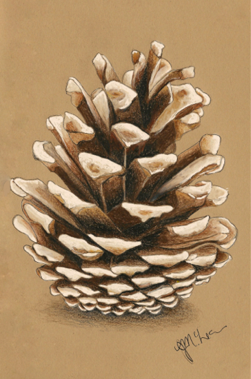 Lonely Pinecone